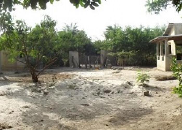 cole Sénégal